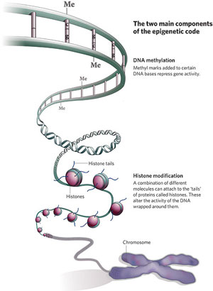 Image of components of epigenetic code