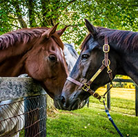 Photo of Josh the horse, courtesy of Elisabeth Mekosh/Tara Katherine Photography LLC