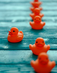iStock photo illustration of toy ducks in a row with one out of order